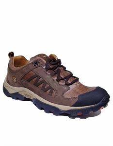 Picture of Woodland 1836115 Brown